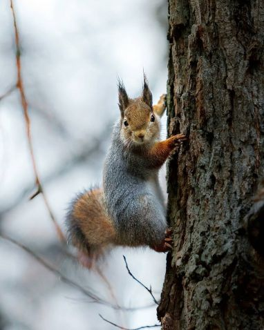 b_382_478_16777215_00_https___mymodernmet.com_wp_wp-content_uploads_2018_01_forest-animals-photography-joachim-munter-39.jpg
