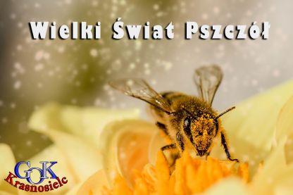 b_416_277_16777215_00_images_bee-1726659_1920.jpg